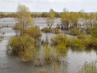 """Омский депутат забрался по пояс в болото и показал, как """"измерять реальность"""" во время паводка (ВИДЕО)"""