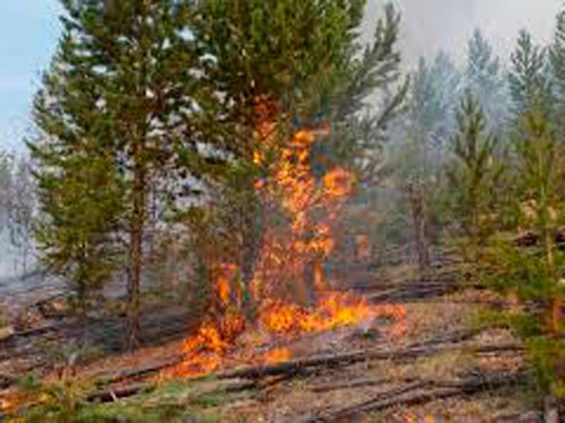 """В Бурятии пожар в детском лагере """"Дружба"""" перекинулся на лесную зону"""
