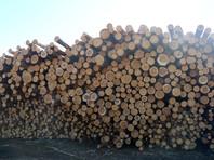 """Правоохранительные органы посчитали политической деятельностью его выступление на телеканале """"Россия-24"""", в котором он критиковал природоохранное законодательство, рассказывал о браконьерстве и вырубке леса в регионе"""
