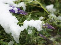 По сообщениям в соцсетях, 1 июня выпал снег сразу в нескольких крупных городах - Сургуте, Новом Уренгое и Ноябрьске