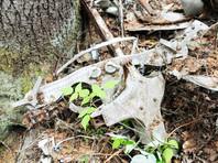 В Хабаровске захоронили останки пассажиров лайнера, пропавшего 81 год назад