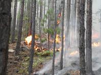 1 июля в МЧС сообщили, что ситуация с лесными пожарами в Сибири стабилизируется