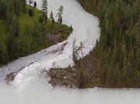 В Горном Алтае ищут троих детей, унесенных рекой Катунь во время купания без присмотра
