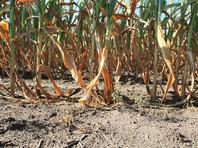В России запретили выращивать ГМО