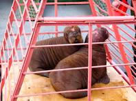 Прокуратура снова занялась приморским океанариумом, где еще до открытия погибли 11 животных