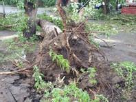 Сильный ветер с дождем повалил деревья, затруднив движение транспорта, оборвал линии электропередач и повредил кровли частных жилых домов