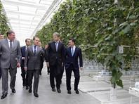 Медведев, осматривая теплицы, сообщил об отсутствии решения по возврату турецких овощей на рынок РФ