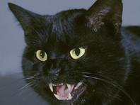 В Костроме в депутаты Госдумы выдвинули кота Бегемота