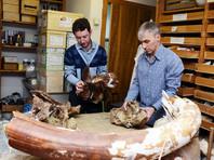 Российские ученые открыли новый вид титанозавров, обитавших в Западной Сибири