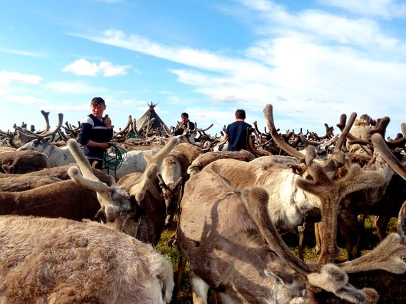 Губернатор Кобылкин отменил карантин в зоне вспышки сибирской язвы на Ямале