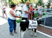 Омские полицейские забрали у фермеров теленка, которого готовили в дар Путину