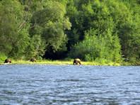 Туристам на Камчатке посчастливилось увидеть белоснежного бурого медведя (ФОТО)