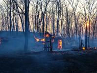 Генпрокуратура насчитала 3 млрд рублей ущерба от лесных пожаров с начала 2016 года