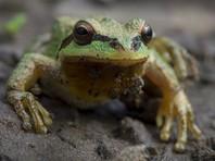 Жительница Хабаровска обнаружила зеленую лягушку в салате из супермаркета