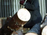 """Следователи не нашли рабов на лесопилке в Братске, откуда пришла записка с просьбой """"Памогите!"""""""