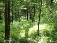 В Хабаровском крае нашли 77-летнего грибника, двое суток пролежавшего обездвиженным в лесу