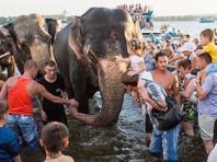 """""""Больше, чем на День города"""": в Нижнем Тагиле сотни человек собрались, чтобы посмотреть на купание слонов (ВИДЕО)"""