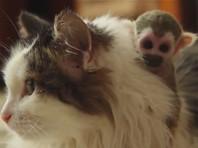 В Тюмени кошка усыновила новорожденного детеныша обезьянки, брошенного матерью (ВИДЕО)