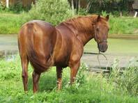 В Приморье лошадь откусила четырехлетнему малышу нижнюю губу