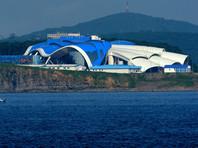 В океанариуме на острове Русский погиб дельфин из Японии