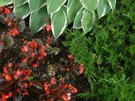 В Абакане дети отравились семенами неизвестного растения с клумбы возле детского сада