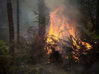 В Бурятии суд отправил в колонию строгого режима бездомного, устроившего три лесных пожара
