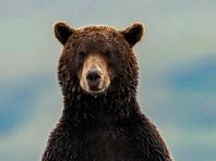 На Курилах в центре села полицейские убили  разъяренного медведя