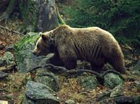"""В Якутии медведь растерзал сотрудника  геологоразведочной экспедиции """"Алросы"""""""