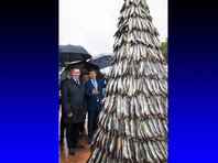 Во Владивостоке к ВЭФ соорудили гигантскую елку из рыбы (ФОТО)