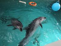 Смерть дельфинов в Приморском океанариуме не связана с качеством воды и корма, заявило руководство