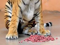 Наглая кошка ворует мясо у хищников в зоопарке Владикавказа