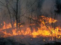 Минлесхоз Иркутской области 10 лет не обращал внимание на пожары и вырубку в местных лесах