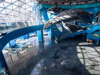 Приморский океанариум после скандала с гибелью животных приостановил продажу билетов и пригласил Запашного