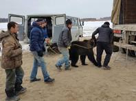 Ехали медведи на аэроглиссере: якутские спасатели пришли на помощь московскому цирку шапито (ФОТО)