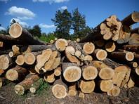 Минсельхоз вот уже 10 лет не занимался обновлением лесоустройства, есть основания полагать, что реальные запасы древесины отличаются от официальных показателей