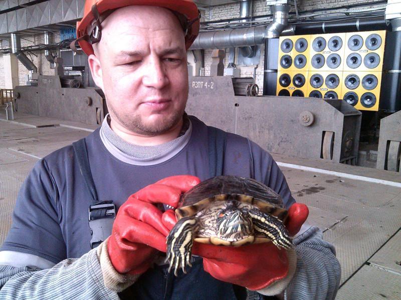 На ГЭС в Новосибирске выловили красноухую черепаху