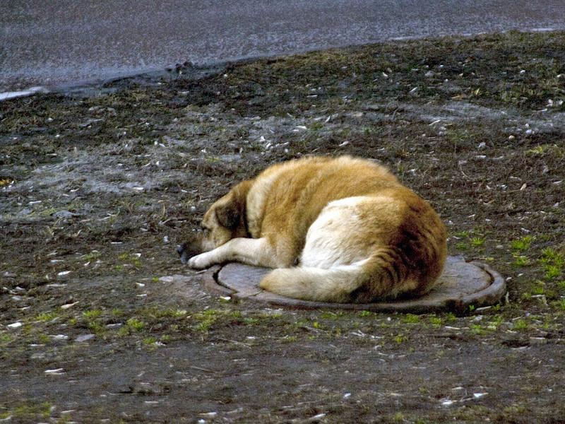 Полиция Хабаровска возбудила уголовное дело о жестоком обращении с животными по факту публикации снимков, на которых две несовершеннолетние жительницы города издеваются над кошками и собаками. Одна из подозреваемых, ставшая фигуранткой дела, задержана в Новосибирке