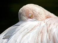В Красноярском крае жители приютили замерзающего фламинго Васю (ВИДЕО)