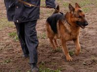 На весь Петербург осталась только одна обученная на поиск взрывчатки собака