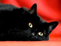 Зоозащитники в регионах беспокоятся за черных котов, которых якобы приносят в жертву на Хеллоуин