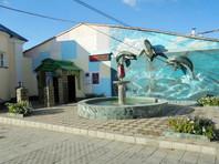 В Свердловской области колония обзавелась дельфинами (ВИДЕО)