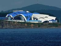 СК возбудил дело после гибели двух дельфинов в Приморском океанариуме