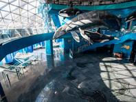 Эксперты проверили воду из Приморского океанариума, где погибли дельфины и сивуч