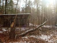 По данным Министерства природных ресурсов региона, из-за сильного ветра в вольере, где обитала Тихоня, рухнуло старое дерево. Оно свалило угол ограждения, и тигрица смогла пройти по стволу и выбраться на волю