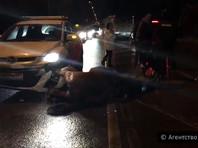 В Москве водитель сбил сотрудницу полиции на лошади