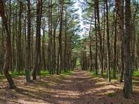 В Приморье расследуют девять уголовных дел о махинациях с землями Минобороны
