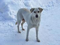 В пригороде Хабаровска нашли пакет с отрубленными головой и лапами собаки