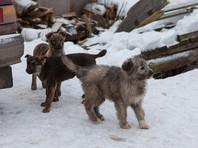 В Тульской области живодеры расстреляли восемь собак, полиция начала проверку