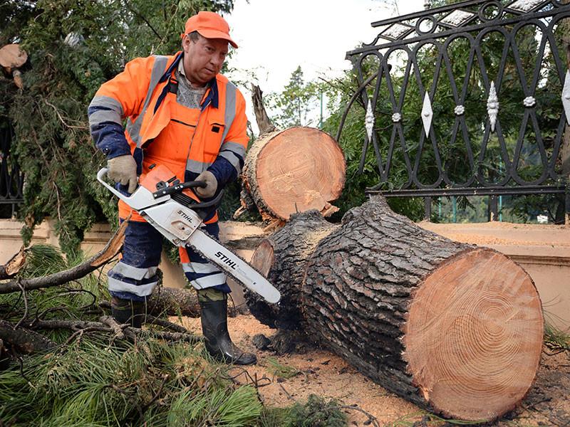 В Сочи штормовым ветром повалило десятки деревьев, которые парализовали автомобильное и железнодорожное движение и оставили один микрорайон без света, оборвав линии электропередач и повредив трубу газопровода
