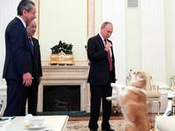 """""""Правильно испугались"""": Путин показал японским журналистам свою строгую собаку породы акита-ину"""